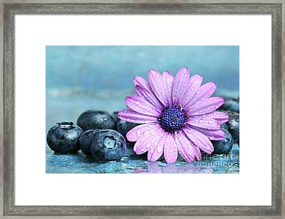 Blueberries And Daisy Framed Print by Sandra Cunningham