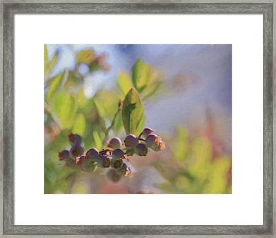 Blueberries And Sunlight Framed Print by Heidi Smith
