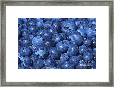 Blueberries With Waterdrops Framed Print by Sharon Talson