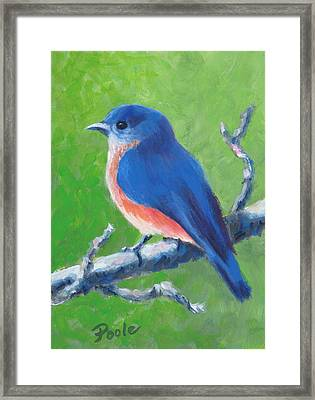 Bluebird In Spring Framed Print
