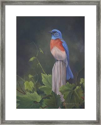 Bluebird Framed Print by Kathleen  Hill