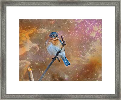 Bluebird Perched In Space Framed Print