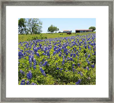 Bluebonnet Farmhouse Framed Print by Lynnette Johns