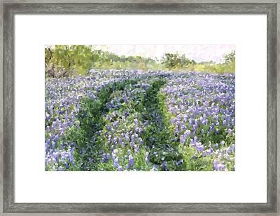 Bluebonnet Trail Framed Print