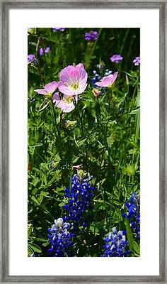 Framed Print featuring the photograph Bluebonnets And Buttercups by Lynnette Johns