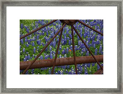 Bluebonnets And Rusted Iron Wheel Framed Print