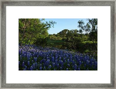 Bluebonnets At The Pond Framed Print