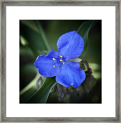 Bluegreen Framed Print by Michael Putnam