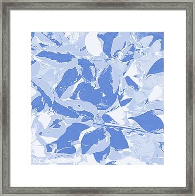 Blueming Blue  Framed Print by Keren Shiker