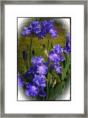 Bluest Of Blue 2  Framed Print by Susan  Lipschutz