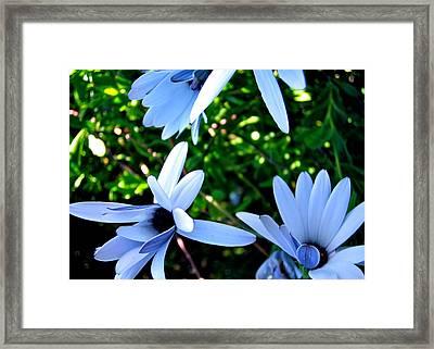 Bluey Twinkles Framed Print by HweeYen Ong