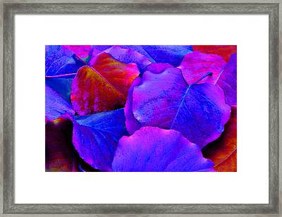 Bluish Purple And Pink Leaves Framed Print by Sheila Kay McIntyre