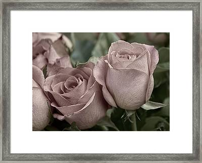 Framed Print featuring the photograph Blushed Rose by Kathleen Holley