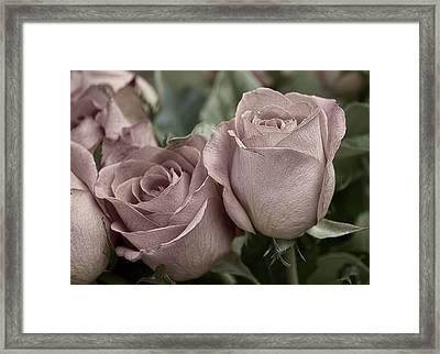 Blushed Rose Framed Print by Kathleen Holley