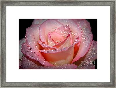 Blushing Rose Framed Print by Tracy  Hall