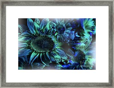 Blushing Sunflowers Framed Print by Christine Mayfield