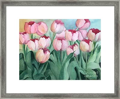Blushing Tulips Framed Print