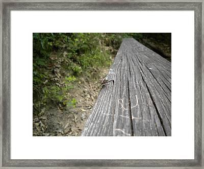 Boardwalk Framed Print by Tessa Priddy