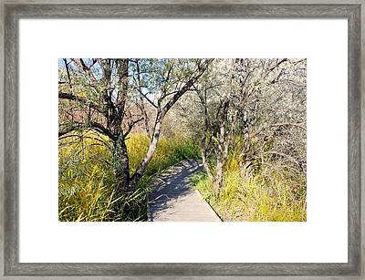 Boardwalk To The Birds Framed Print by John  Greaves