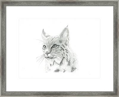 Bob Cat 1 Framed Print