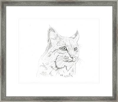 Bob Cat 2 Framed Print