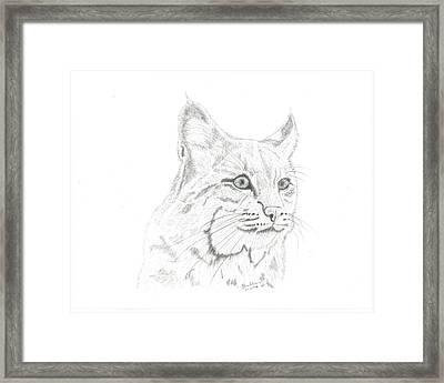 Bob Cat 2 Framed Print by EJ John Baldwin