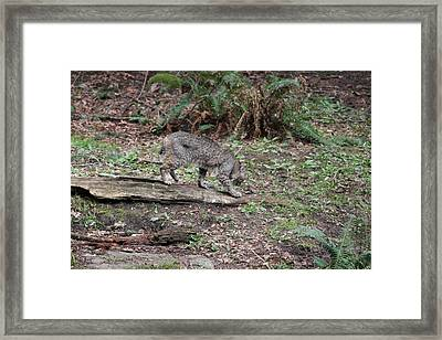 Framed Print featuring the photograph Bobcat - 0018 by S and S Photo