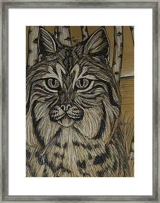 Bobcat And Birch 2  Framed Print by Olivia Hoppe