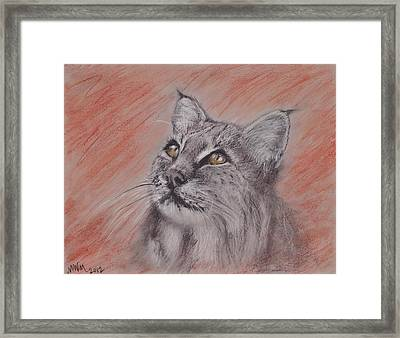 Bobcat Framed Print by Michelle Wolff