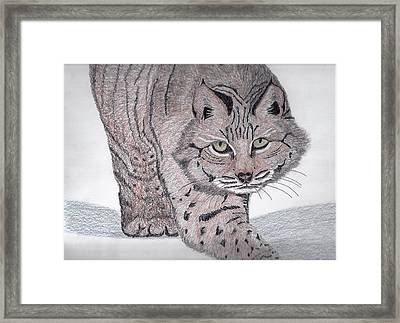 Bobcat Framed Print by Tony  Nelson