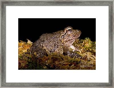 Bobs Robber Frog Framed Print