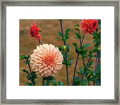 Framed Print featuring the photograph Bodaciously Orange by Jeanette C Landstrom
