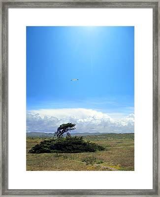 Bodega Bay Framed Print by Ric Soulen