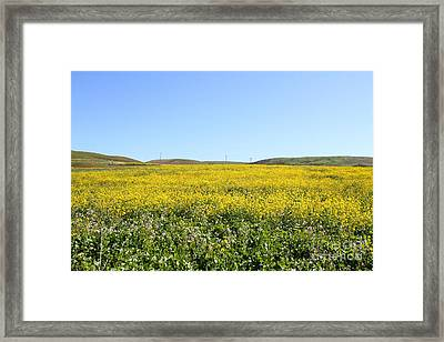 Bodega Bay . Yellow Field . 7d12403 Framed Print by Wingsdomain Art and Photography