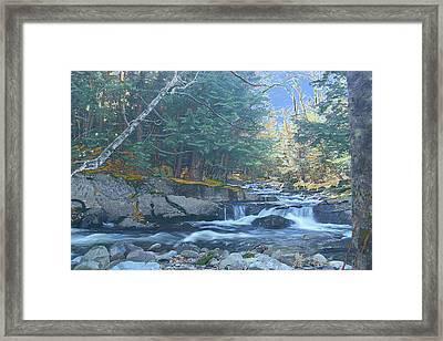 Bog Brook Framed Print