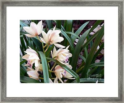 Bok Tower Gardens  Framed Print