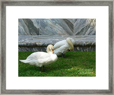 Bok Tower Swans Framed Print