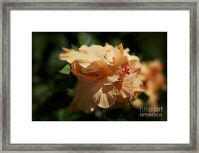 Bold And The Beautiful Framed Print by Jacques ISMAEL