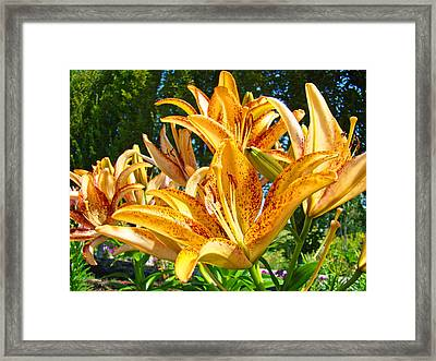 Bold Colorful Orange Lily Flowers Garden Framed Print by Baslee Troutman