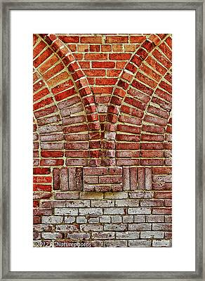 Framed Print featuring the photograph Bold Old And Beautiful by Rachel Cohen