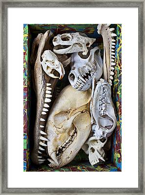 Bone Box Framed Print