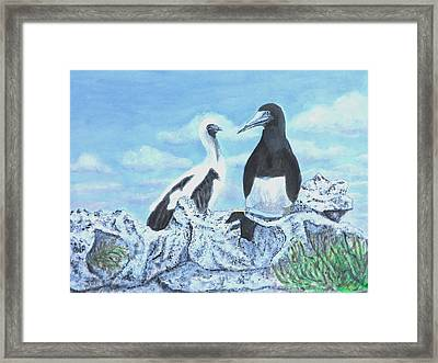 Booby Bird Mom And Chick Framed Print
