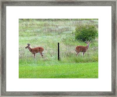 Bookend Twin Bucks Framed Print by Will Borden