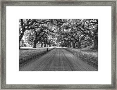 Boone Plantation Driveway Framed Print by Nick  Shirghio