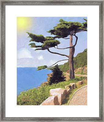 Boothbay Pine Framed Print by Richard Stevens