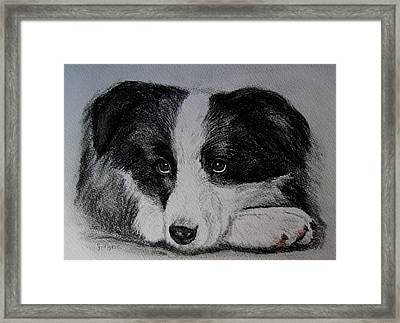 Borden Collie Pup Framed Print by Joan Pye