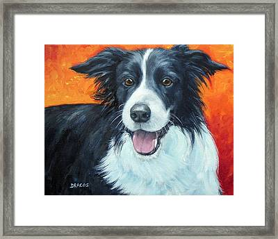 Border Collie On Red Framed Print by Dottie Dracos