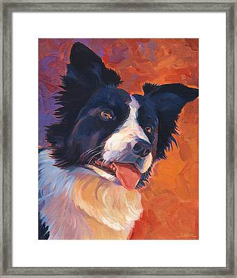 Border Collie Framed Print by Shawn Shea