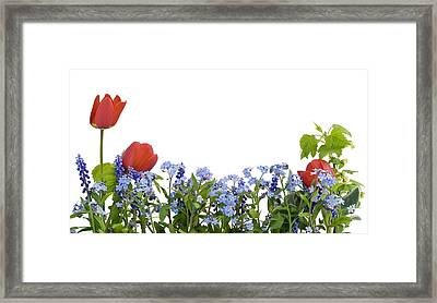 Framed Print featuring the photograph Border From Myosotis And Tulips by Aleksandr Volkov