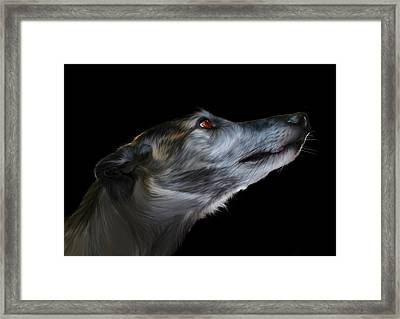 Born For The Run Framed Print by Julie L Hoddinott